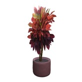 Wonder Tree Plant