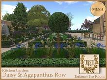 TTR-Kitchen Garden-Daisy & Agapanthus Row