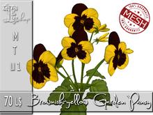 Brownish-yellow Garden Pansy MT