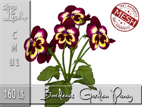 Bordeaux Garden Pansy MC
