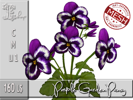 Purple Garden Pansy MC
