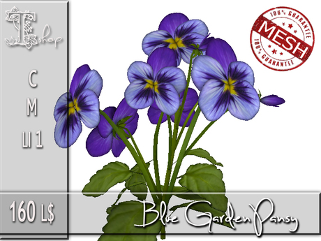 Blue Garden Pansy MC