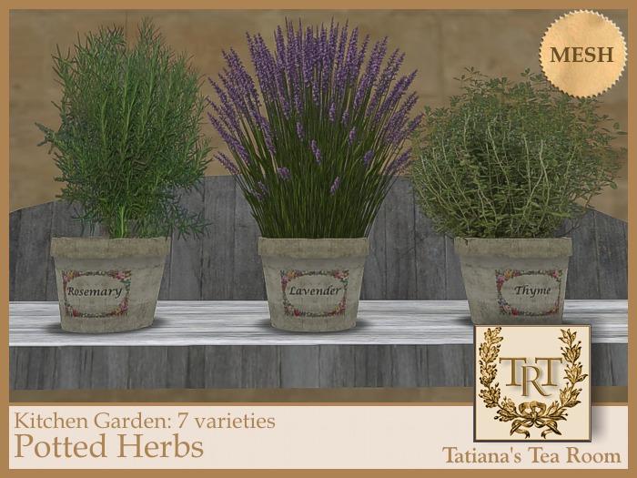 TTR-Kitchen Garden-Potted Herbs (7 varieties)