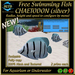 Free Swimming Fish - CHAETODON (silver)