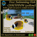 FREE SWIMMING FISH - CHAETODON (yellow) - UPDATE 2017