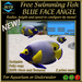 FREE SWIMMING FISH - BLUE FACE ANGEL - UPDATE 2017