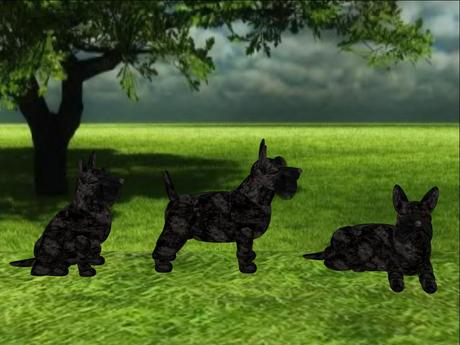 Scottish Terrier Scripted and Animated Dog