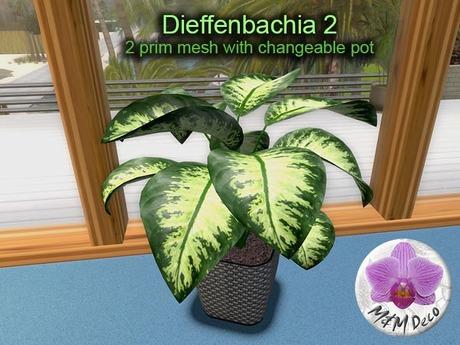 Mesh Plant Dieffenbachia 2