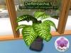 3D Mesh Plant Dieffenbachia 1