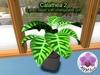 Mesh Plant Calathea 2