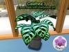 Mesh Plant Calathea 3