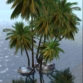 Palm Group Zun Design