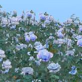 Rose Garden : Rose encompassed me blue