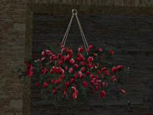 Rose of hanging Dred
