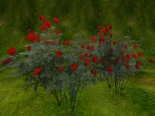 Stock of Rose(1prim) red