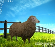 Animal Farm - Sheep