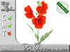 Red Poppies in a vase MC