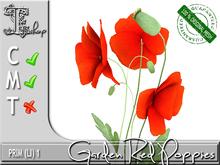 Garden Red Poppies  MC