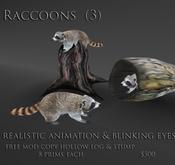 09 raccoon