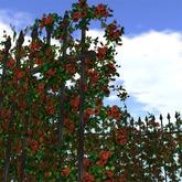 Hedge of rose (oldrose color)
