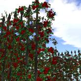 Heart Rose Wreath_Dred