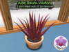 Mesh Plant Aloe Rauhii Visoflora
