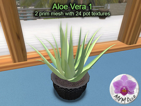 Mesh Plant Aloe Vera 1