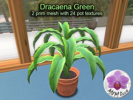 Mesh Plant Dracaena Green