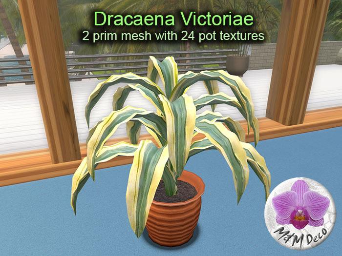 Mesh Plant Dracaena Victoriae