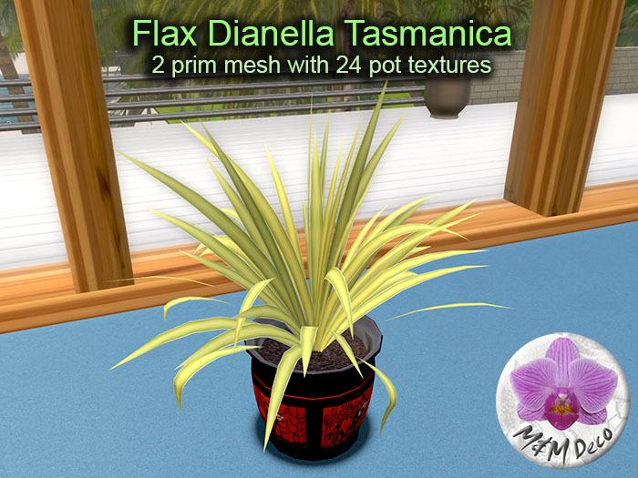 Mesh Plant Flax Dianella Tasmanica