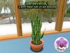 Mesh Plant Sansevieria 1