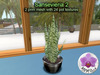 Mesh Plant Sansevieria 2