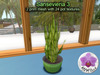Mesh Plant Sansevieria 3