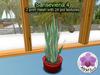 Mesh Plant Sansevieria 4