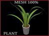T-3D Creation [ PLANT No.4 ] MESH - Full Perm