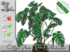 Potted philodendron mt