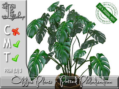 OFFICE PLANTS- Potted Philodendron MT