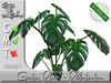 GARDEN PLANTS - Philodendron MC