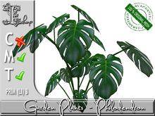 GARDEN PLANTS - Philodendron MT
