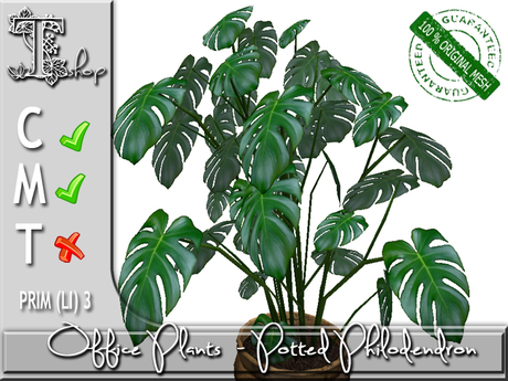 OFFICE PLANTS- Potted Philodendron MC
