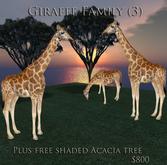 giraffe Family  09 v1