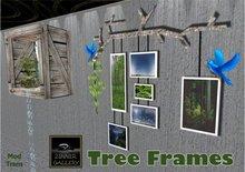 Zinner Gallery - Tree Frames