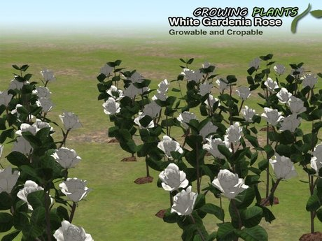 Promotion!!! Growing Plants – Mesh Growable and Cropable White Gardenia Rose