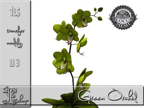 Green Orchid GIFT