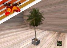 .:: ONE GRID ::. Potted Palm / tagSharetaOsumai tagmeadowbrook tagElderglen tagtahoe