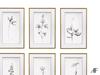 AF Botanical Prints (Study Collection)