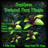 Bentham Twisted Fern Plants (boxed)