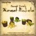 Harvestbucket squash