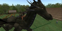 dragon horse to ride