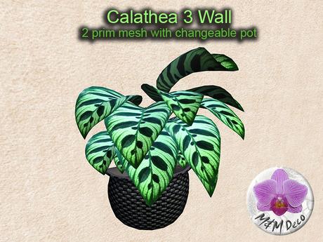 Mesh Plant Calathea 3 Wall